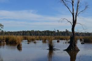 Reedy Swamp