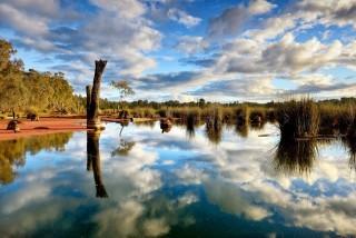 Leight Teitz Reedy Swamp image
