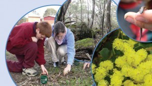 Shepparton Christian Community School Biodiversity Audit - October 2014