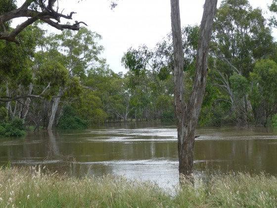 Goulburn River in Flood 2010