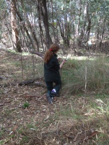 Wanganui Park Works - weeding