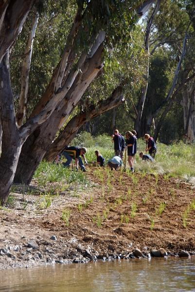 Plantings at Vic Park Lake 2012